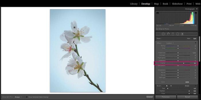 Screenshot of Adobe Lightroom editing flower photography - Lightroom clarity brush increase