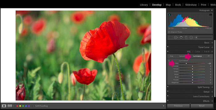 Screenshot of Adobe Lightroom editing flower photography - Lightroom editing view - luminance