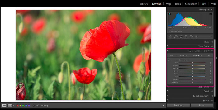 Screenshot of Adobe Lightroom editing flower photography - Lightroom editing colour tips