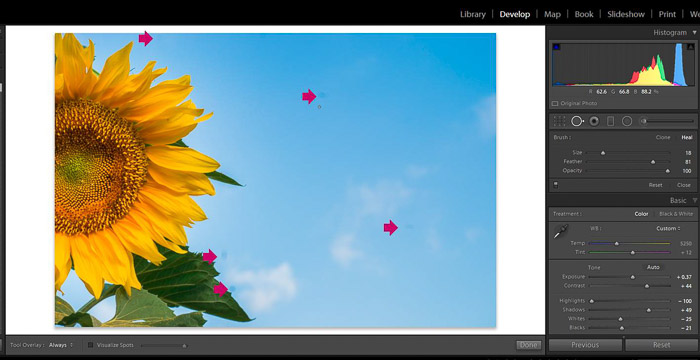 Screenshot of Adobe Lightroom spot removal tool for editing flower photography