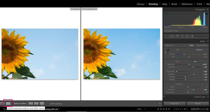 Screenshot of Adobe Lightroom editing flower photography - Lightroom editing view modes compare
