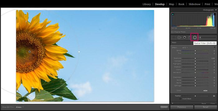 Screenshot of Adobe Lightroom editing flower photography - Lightroom filter lightroom