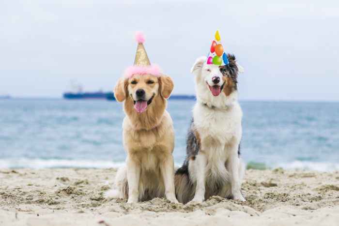 Cute and fun pet portrait of two dogs on a beach wearing partyhats - pet photography cheatsheet
