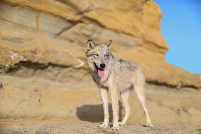 A pet photography portrait of a dog standing in a rocky landscape - pet photography equipment