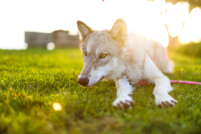 Portrait of a dog lying on the grass - pet photography equipment