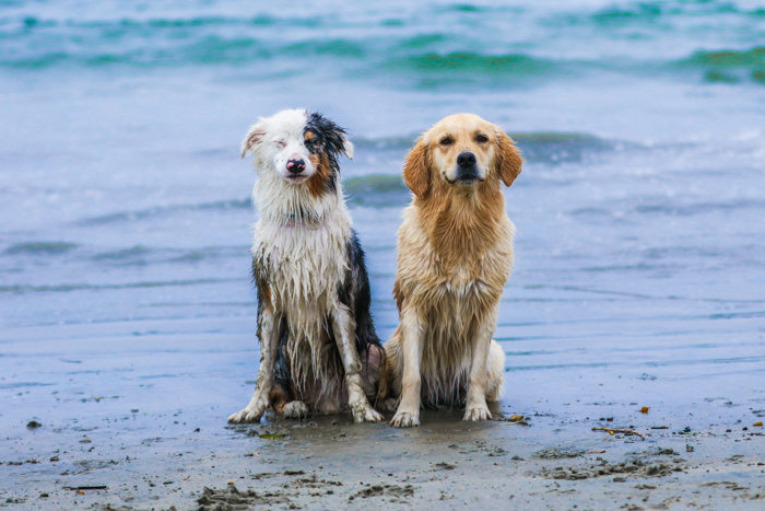 Portrait of two dogs on a beach - pet photography equipment