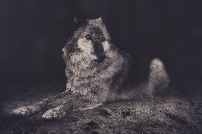 An atmospheric monochrome dog photography shot