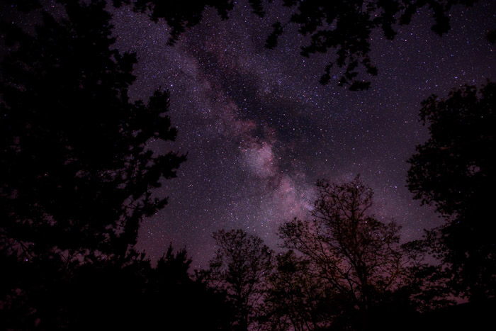 Purple tinged astrophotography shot framed by silhouettes of trees