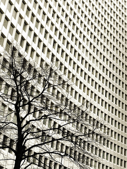 A tree in the foreground of a large multi windowed building demonstrating conceptual weight balance in photography