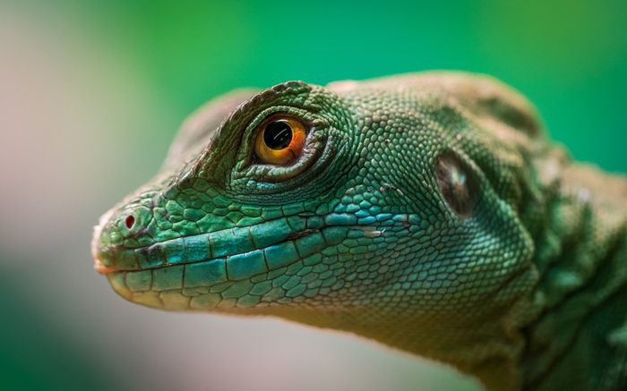close-up photo of a lizard with orange eyes