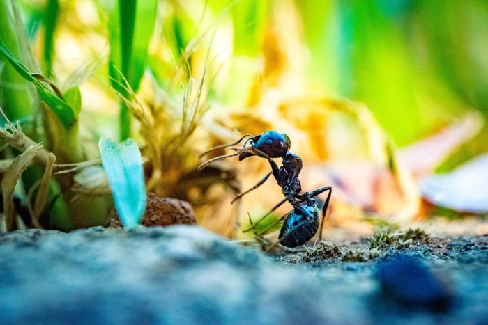 close-up photo of an ant