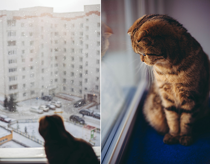 Diptych photo of a cat looking out a window