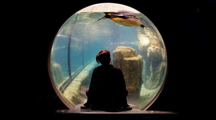 Interesting photo of a girl looking at a penguin through an aquarium window - basic photography terms you need to know.
