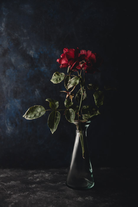 Still life photography ideas of wilting roses in a vase on a dark background.