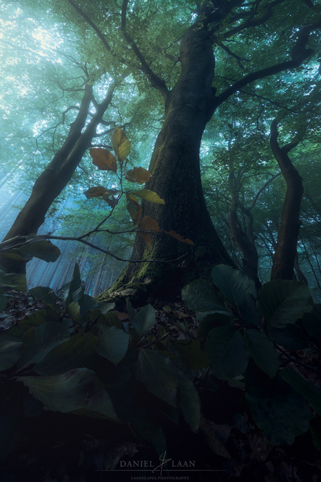 Stunning forest photography taken from a very low angle