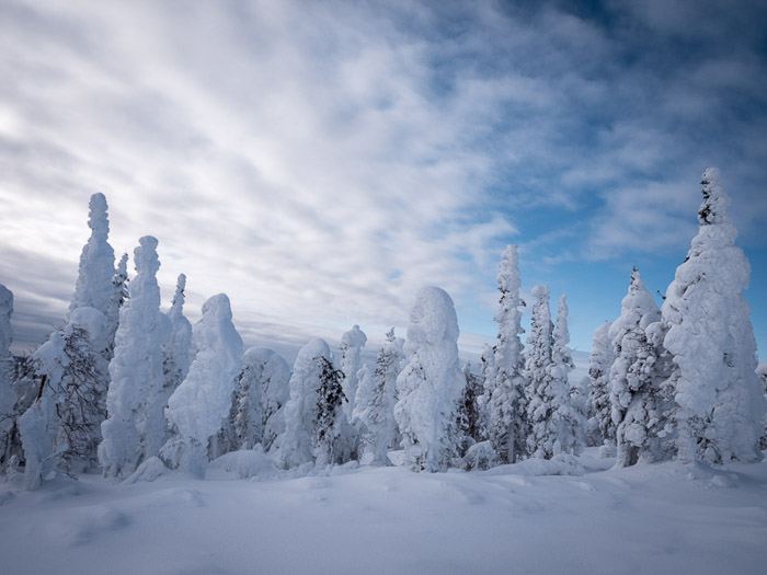 Stunning landscape winter photography shot of snow covered forest.