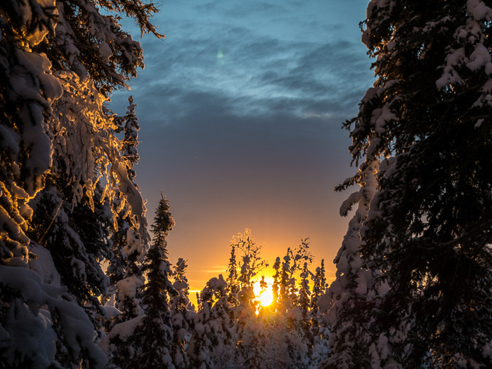Stunning winter photography shot of snow covered forest at sunset.