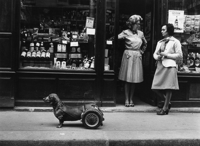 Robert Doisneau humourous street poto of a littel dog with wheels supporting his hind legs, beside two women chatting outside a shop front - famous photographers
