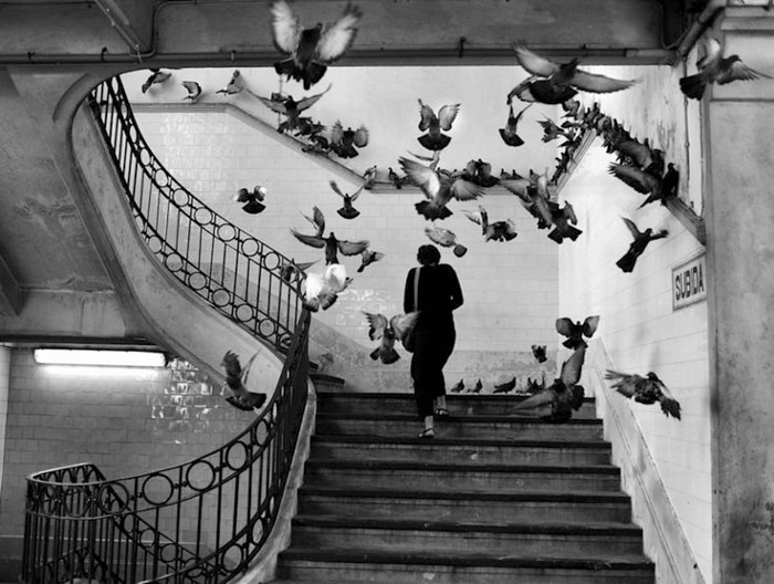Henri-CartierBresson street photo of a woman walking upstairs, a flock of pigeons flying up around her. Famous photographers and their work.