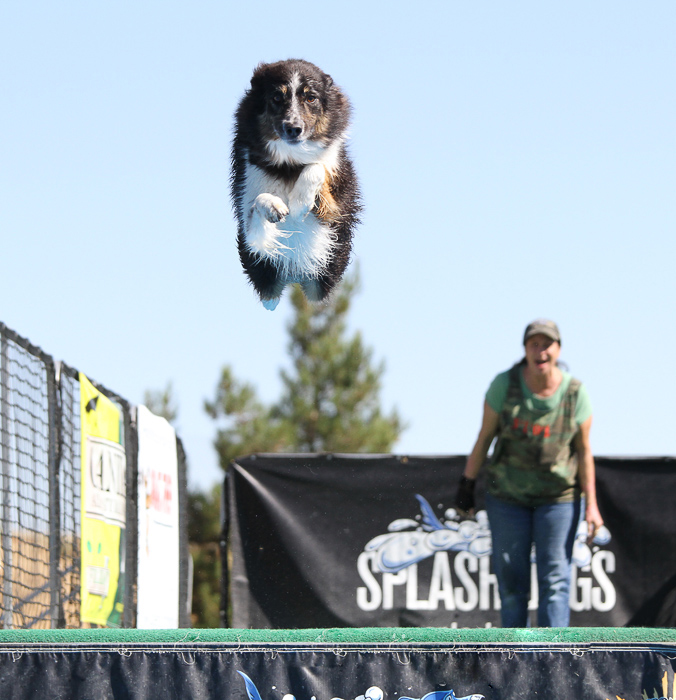 Cool pet photography perspective example of a dog in mid air at agility class
