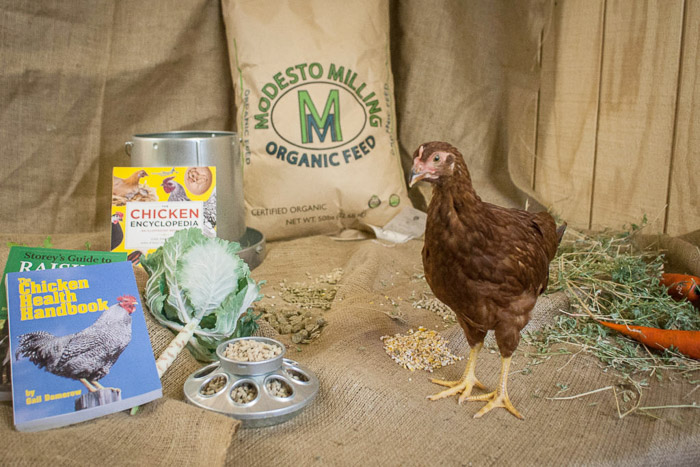 A commercial photography set up featuring a chicken beside chicken food and books