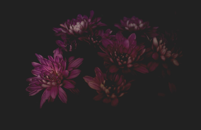a dark photography shot of pink flowers