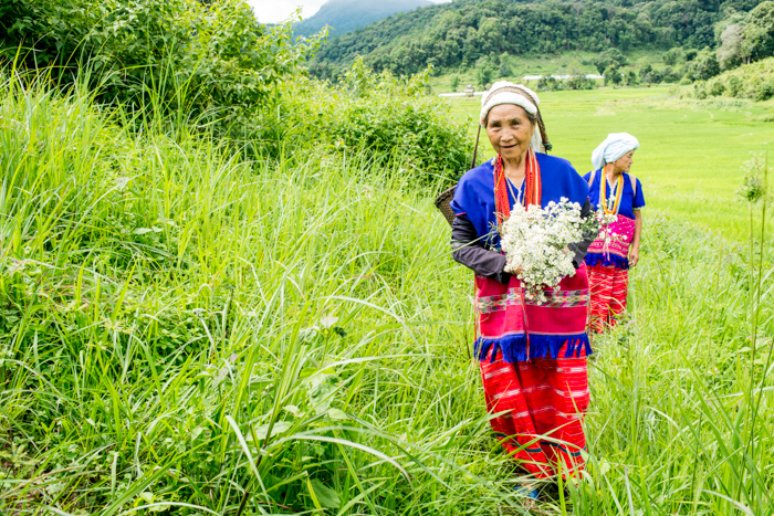 Bright and airy portrait of Karen hill tribe woman working in a luscious green landscape