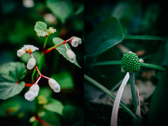 Fresh and green flower photography diptych