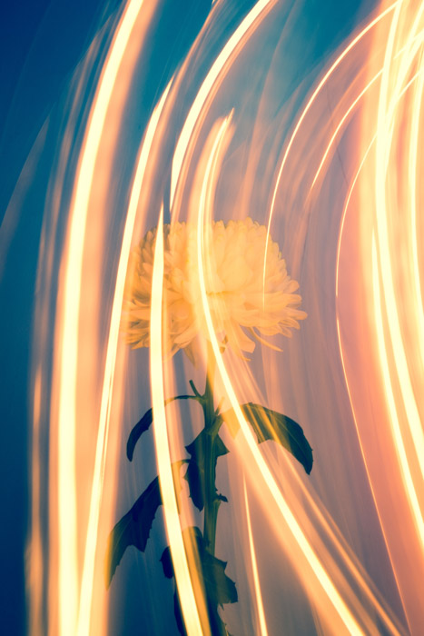 A beautiful double exposure photograph of a yellow flower surrounded by light trails