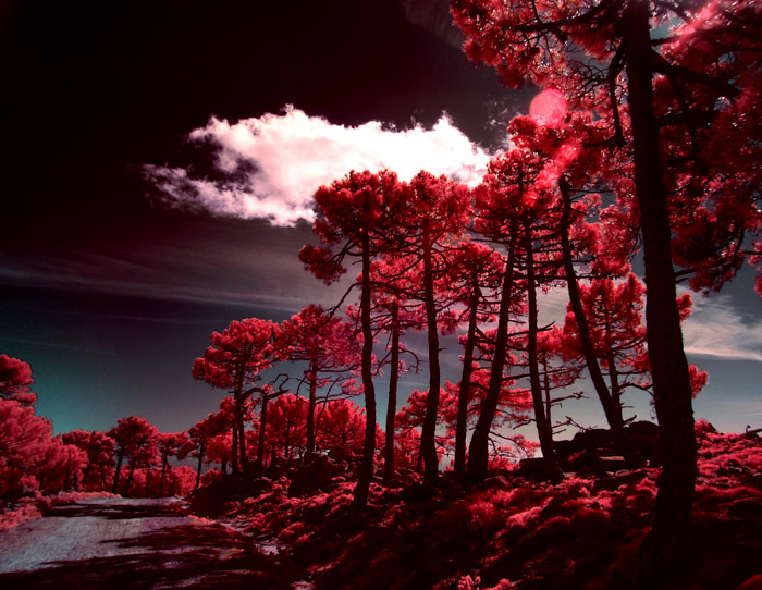 Instense red tinted photo of trees under a cloudy sky