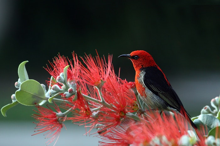 A red bird sitting on a branch
