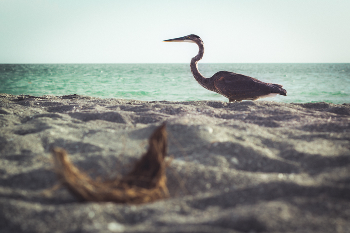 A low angle shot of a bird on the seashore with ocean in the background
