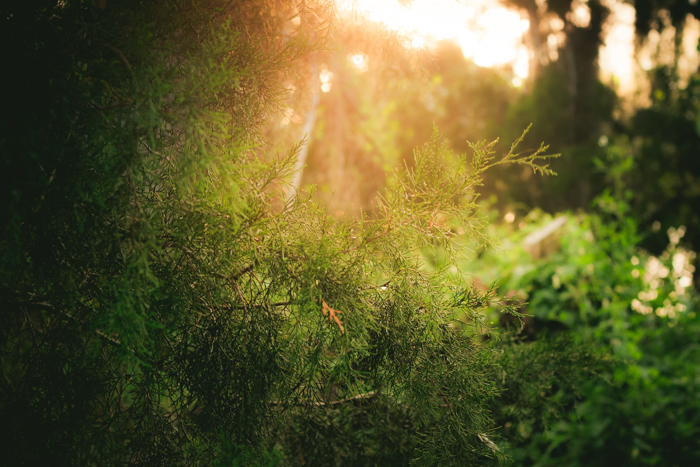Stunning shot of sunlight through green foliage in a forest