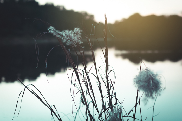 A dreamy low light shot of a lake with plants in the foreground