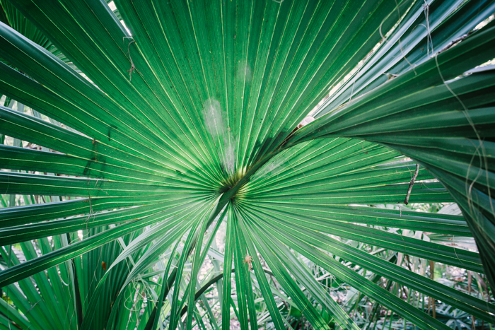 A nature photography shot of the centre of a large green plant