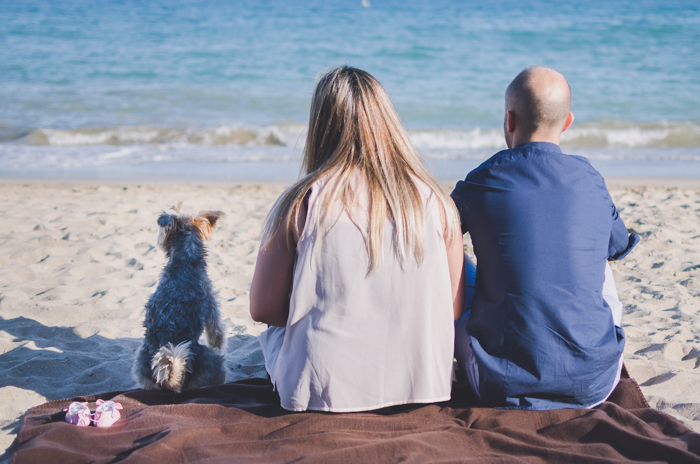A calm beach photo of a couple sitting and a small dog on the sand and gazing into the sea