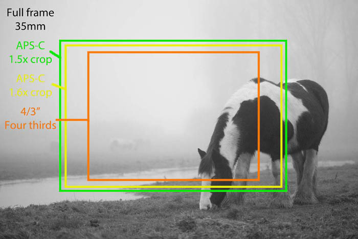 """A black and white image of a piebald horse grazing, overlayed are coloured boxes explaining full frame 35mm, aps-c 1.5x crop, aps-c 1.6x crop, 4/3"""" four thirds"""