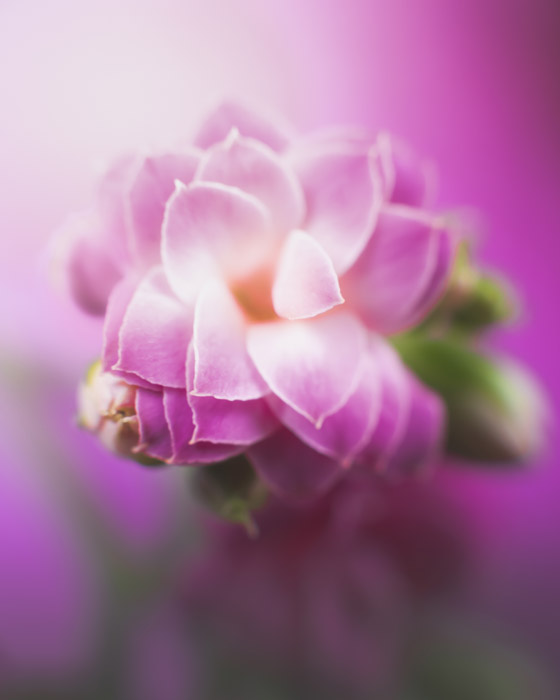 Photo of a pink flower with beautiful bokeh effects in the background