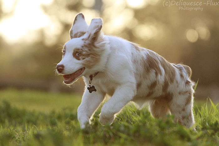 Cute pet portrait of a dog running on grass