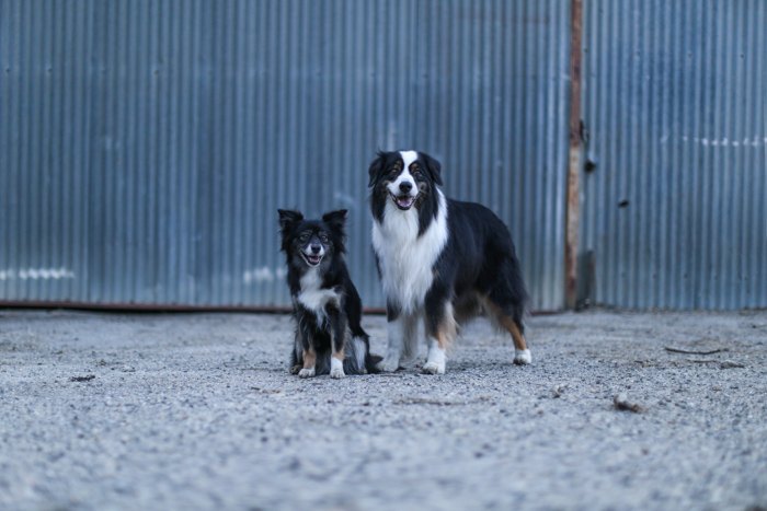Pet portrait of two dogs standing outside an industrial type building