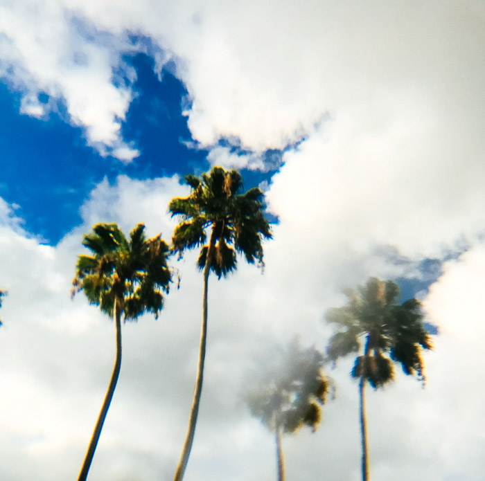 A double image of two palm trees against a cloudy sky created through prism photography
