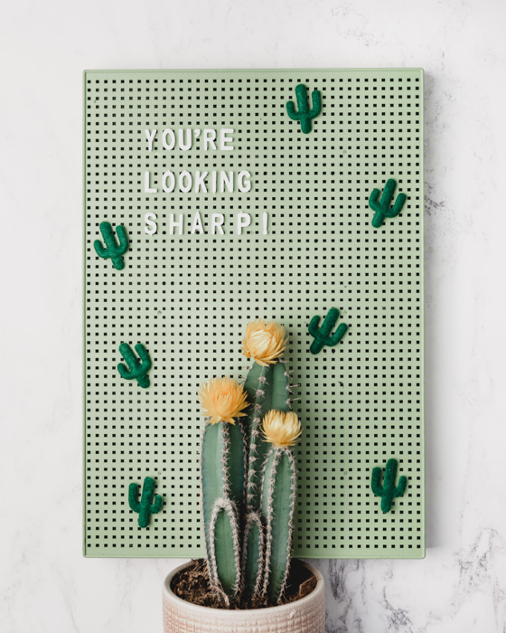A potted cactus plant in front of a frame with the words 'you're looking sharp' - diy product photography