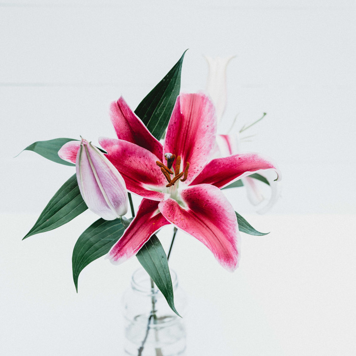 Bright and airy photo of a pink flower - DIY product photography tips