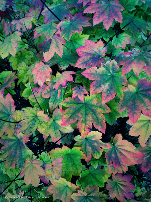 A photo of fantastically bright colored leaves taken with iphone photography