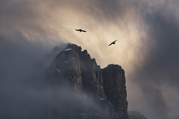 Two Alpine choughs caught twirling in the mists above Lagazuoi in the Dolomites.