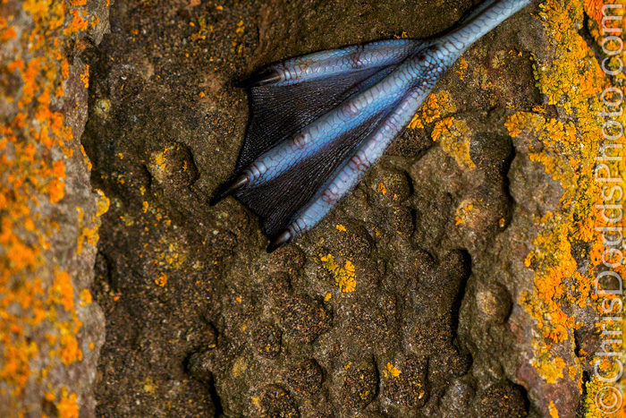 A close up of a birds foot on a mossy rock by nature photographer Christopher Dodds