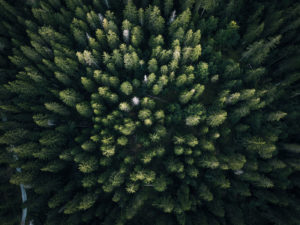 trees pre-flight checklist for safe drone photography