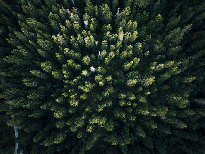 Aerial shot of a forest of green trees