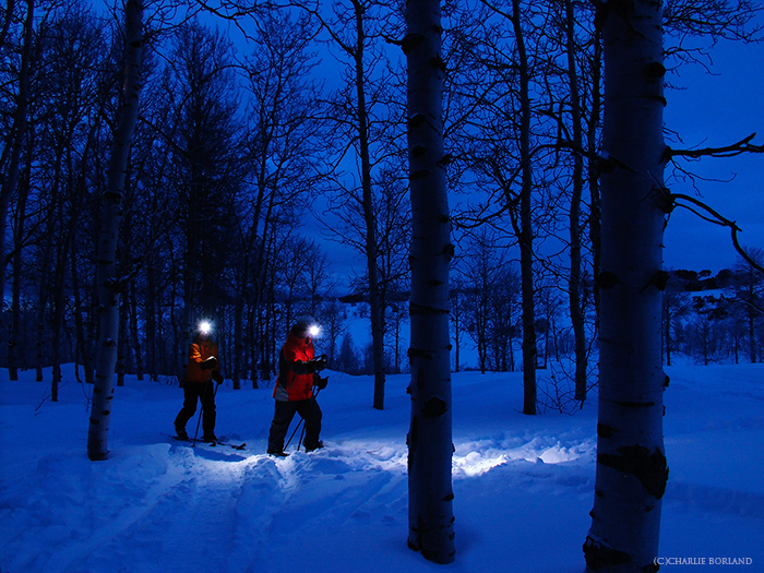 hikers with headlamps walking through the snowy forest at dusk, everything looks blue in the winter night
