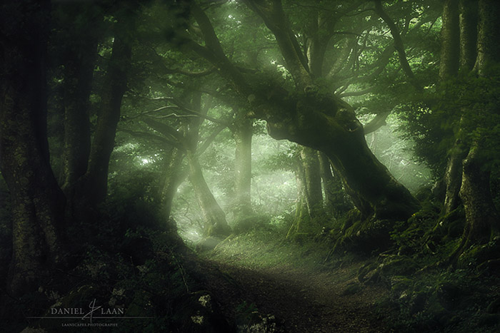 Atmospheric forest photography